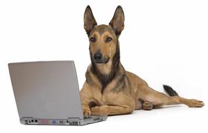 dog on a computer